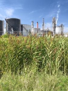 Refinery behind reedbed
