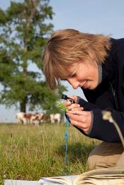 Ecologist conducting fieldwork
