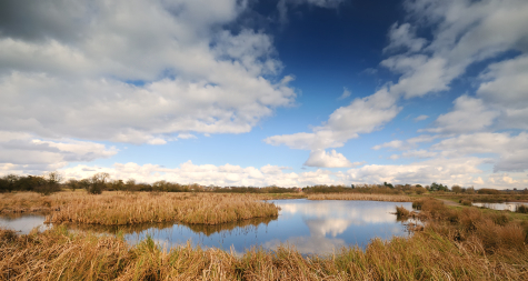 Panaroma across wetland habitat